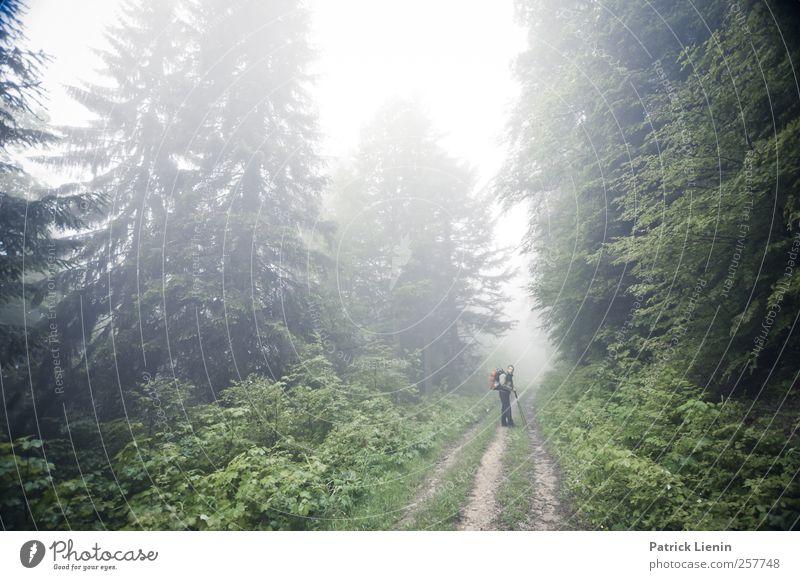 These days Mensch Natur Ferien & Urlaub & Reisen Pflanze Baum Erholung Landschaft ruhig Ferne Wald Umwelt Berge u. Gebirge Straße Freiheit maskulin Wetter