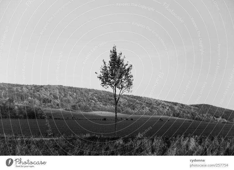Im Herbst Umwelt Natur Landschaft Wolkenloser Himmel Baum Wiese Feld Wald Hügel ästhetisch Einsamkeit einzigartig Erholung Freiheit Horizont Idylle Leben