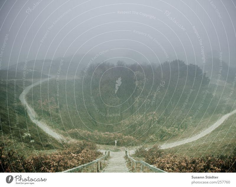 Entscheidung Baum Wald Herbst Wiese Landschaft Gras Wege & Pfade Park Nebel Treppe Erfolg Sträucher Hügel Konkurrenz schlechtes Wetter Ausdauer
