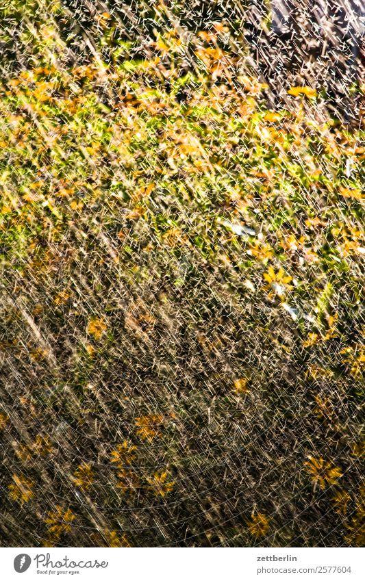 Rasensprenger Blume Blühend Blüte Garten gießen Schrebergarten Kleingartenkolonie Menschenleer Natur Niederschlag Pflanze Regen Regenwasser Sommer Gießkanne