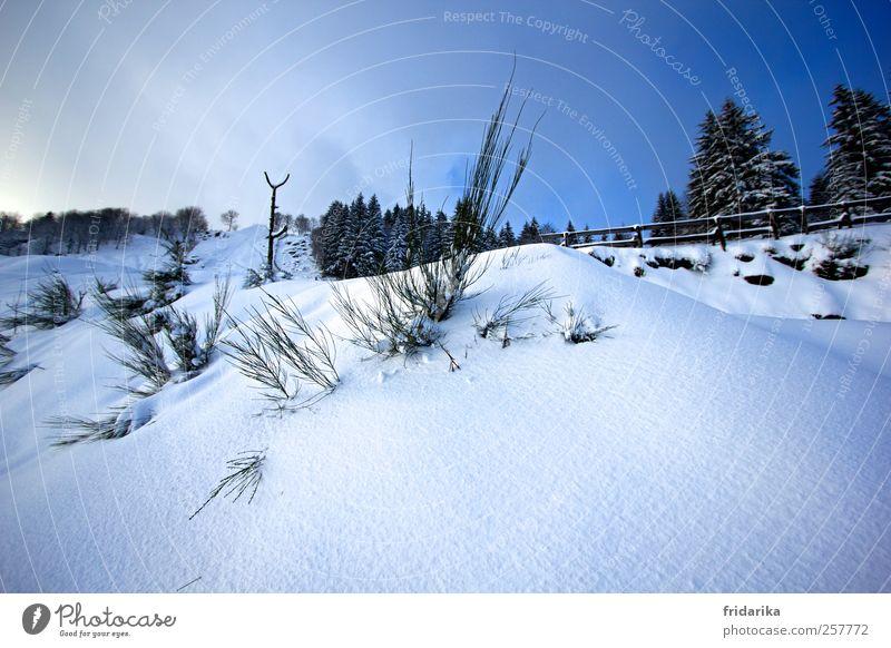 kleiner Hügel Umwelt Natur Landschaft Himmel Schönes Wetter Schnee Sträucher Tanne Berge u. Gebirge hell kalt blau schwarz weiß Klima Zaun Farbfoto