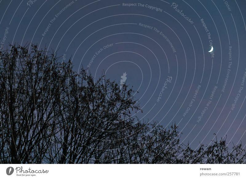 Nachthimmel Himmel blau Baum dunkel schlafen Sträucher Mond Wolkenloser Himmel Sichelmond