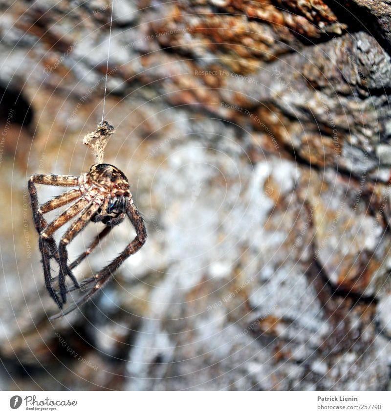 Horror Umwelt Natur Tier Wildtier Totes Tier Spinne 1 Angst Entsetzen Todesangst gefährlich Nervosität verstört Schüchternheit Respekt Ekel hängen Stein fremd