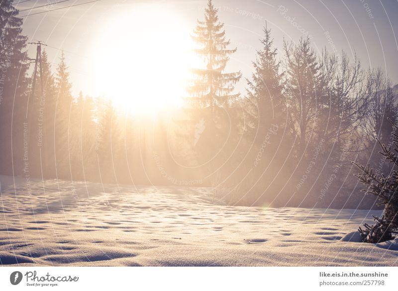 guten morgen, sonnenschein** Natur Ferien & Urlaub & Reisen schön Sonne Landschaft ruhig Ferne Winter Wald Berge u. Gebirge Umwelt Wiese Schnee Ausflug Schönes Wetter Urelemente