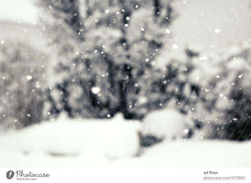 this is my winter Natur Winter Wetter schlechtes Wetter Eis Frost Schnee Schneefall Baum Sträucher Garten Park ruhig Schneeflocke Farbfoto Menschenleer