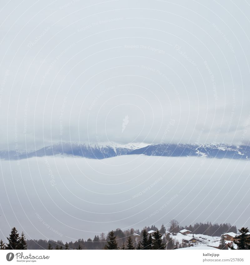 zwischen den wolken Umwelt Natur Landschaft Himmel Wolken Nebel Hügel Felsen Alpen Berge u. Gebirge Schneebedeckte Gipfel ruhig Schweiz Kanton Wallis Tal Tanne