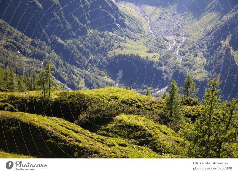Grüner Abgrund Ferien & Urlaub & Reisen Tourismus Sommer Berge u. Gebirge Umwelt Natur Landschaft Pflanze Schönes Wetter Baum Gras Sträucher Moos Hügel Felsen