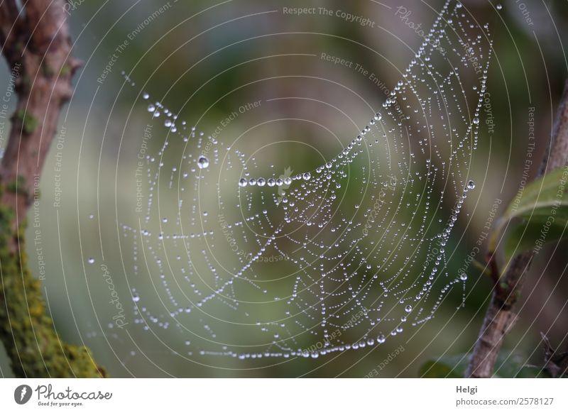Perlenschmuck Umwelt Natur Wassertropfen Herbst Nebel Pflanze Wildpflanze Ast Park Spinnennetz festhalten hängen einzigartig nass natürlich braun grau grün weiß
