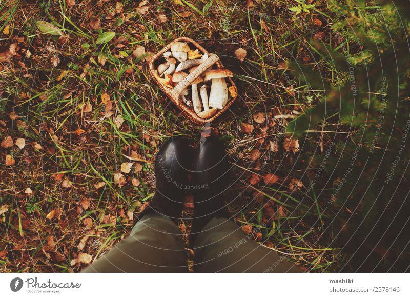 Sammeln von Waldpilzen im Herbstwald Vegetarische Ernährung Lifestyle Jagd Sommer Natur Blatt frisch natürlich wild braun erkunden Lebensmittel Pilz