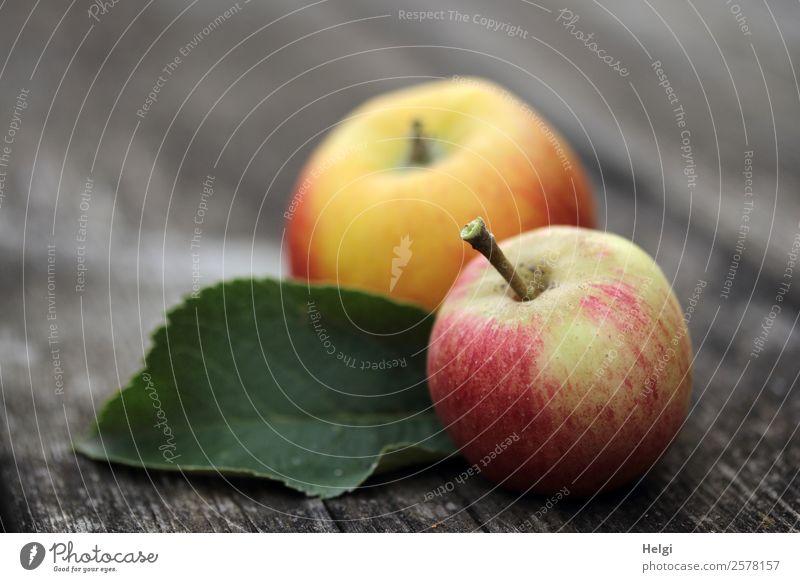 zwei frisch gepflückte Äpfel und ein Blatt liegen auf einem alten Holztisch Lebensmittel Frucht Apfel Ernährung Bioprodukte Vegetarische Ernährung Diät