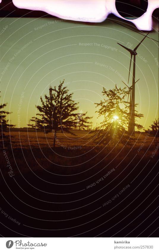 erneuerbar Natur grün Baum Ferien & Urlaub & Reisen gelb Wiese Umwelt Landschaft Feld Energiewirtschaft ästhetisch Klima kaputt Zukunft Wandel & Veränderung Hoffnung