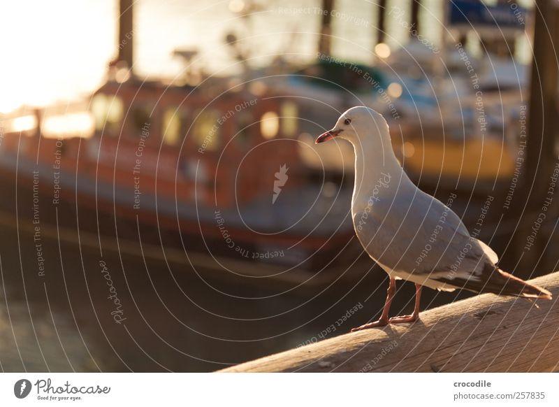 New Zealand 183 Natur Tier Landschaft Vogel Insel Wildtier Fröhlichkeit ästhetisch authentisch beobachten Bucht Lebensfreude Möwe Neuseeland Fischerboot