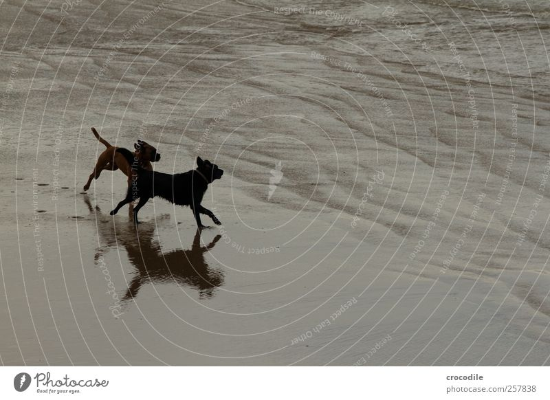 New Zealand 185 Hund Natur Landschaft Freude Tier Strand Umwelt Küste Zufriedenheit Tierpaar laufen ästhetisch Lebensfreude Bucht fangen Haustier