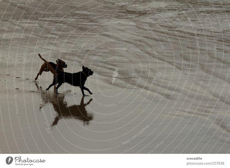 New Zealand 185 Umwelt Natur Landschaft Küste Strand Bucht Tier Haustier Hund 2 Tierpaar fangen laufen ästhetisch Freude Zufriedenheit Lebensfreude Begeisterung