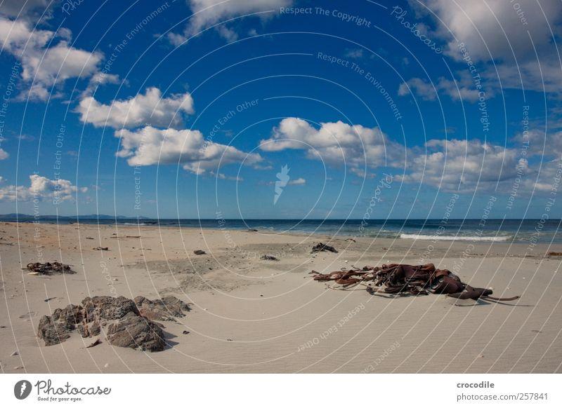 New Zealand 186 Umwelt Natur Landschaft Wolken Schönes Wetter Küste Strand ästhetisch Zufriedenheit Lebensfreude Frühlingsgefühle Algen catlins Neuseeland