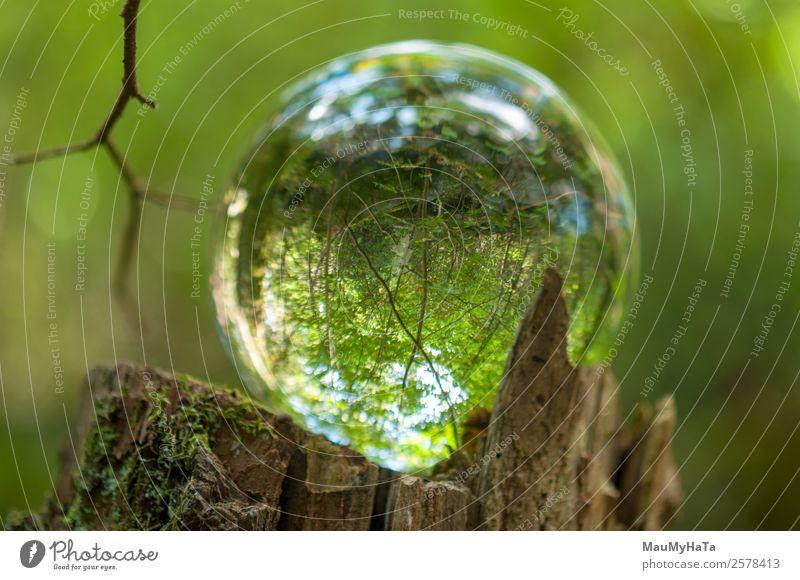 Kristallkugel Natur Landschaft Pflanze Frühling Sommer Herbst Schönes Wetter Baum Gras Garten Park Wald Glück Fröhlichkeit Euphorie Coolness Optimismus Erfolg