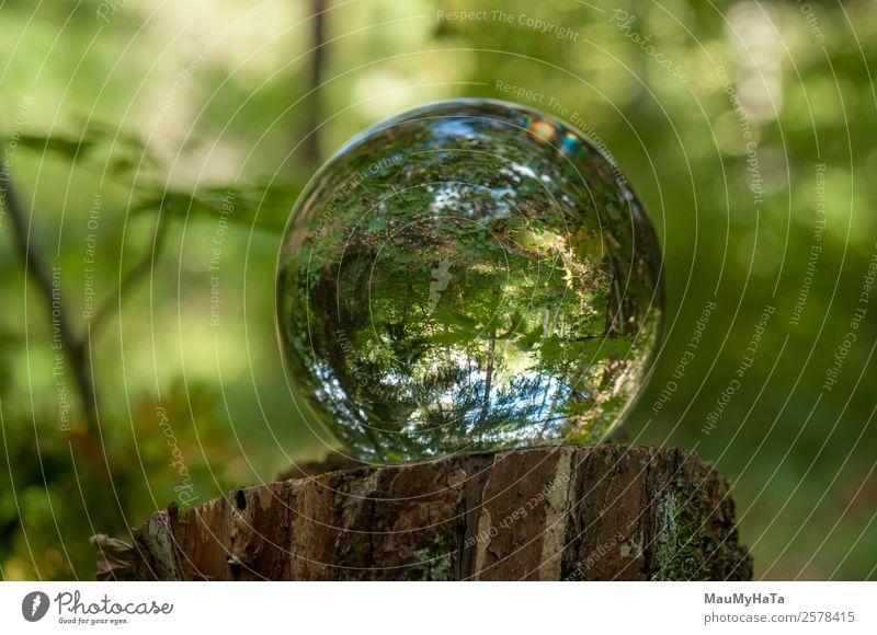 Kristallkugel Natur Landschaft Pflanze Luft Frühling Sommer Herbst Baum Gras Blatt Wildpflanze Garten Park Wald Lupe Luftballon Holz Glas Kristalle Glück
