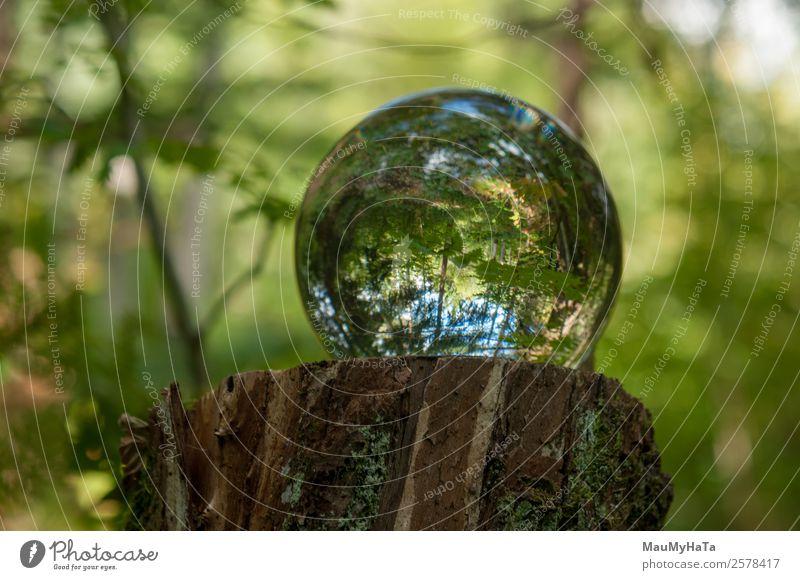 Kristallkugel Natur Landschaft Pflanze Luft Frühling Sommer Herbst Klima Baum Gras Blatt Wildpflanze Garten Park Wald Spiegel Lupe Luftballon Glas Kristalle