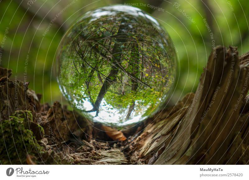 Kristallkugel Natur Landschaft Pflanze Frühling Sommer Herbst Klima Baum Gras Wildpflanze Garten Park Wald Lupe Luftballon Holz Glas Kristalle Glück
