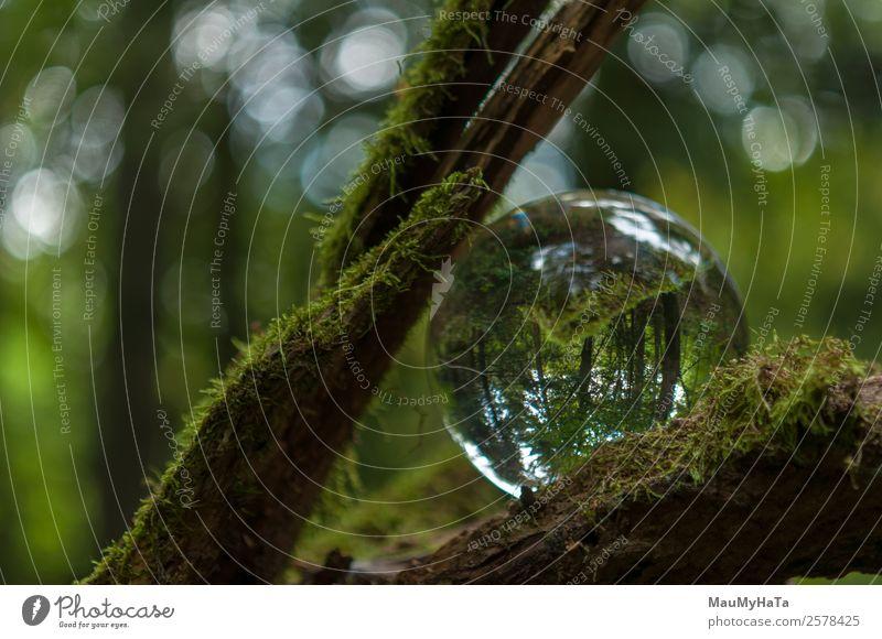 Kristallkugel Natur Landschaft Pflanze Luft Frühling Sommer Herbst Klima Baum Gras Park Feld Wald Fröhlichkeit Euphorie Optimismus Erfolg Farbfoto mehrfarbig