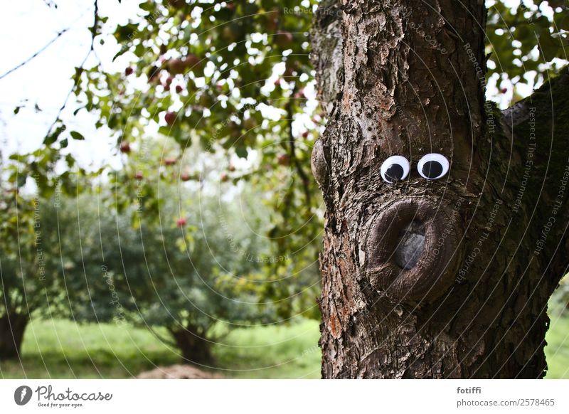 Waldschrat 2 / Wackel 5 Natur Pflanze Baum Freundschaft Baumstamm Auge erstaunt Blick braun Neugier Baumrinde Außenaufnahme