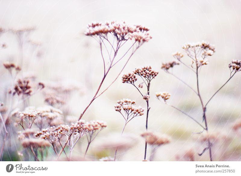 ... Natur Pflanze Umwelt hell rosa Hoffnung Ast Zweig
