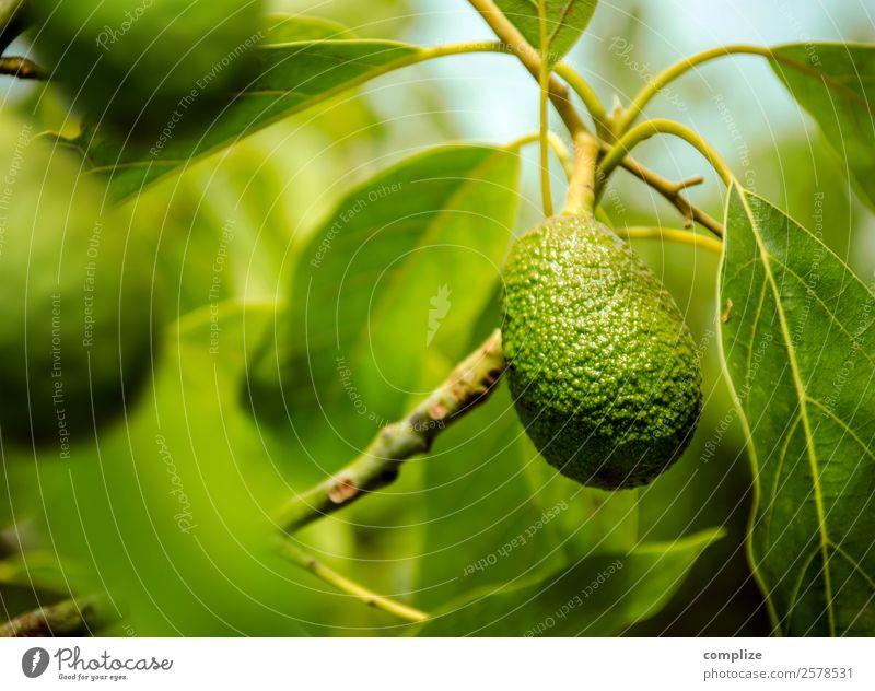 Avocado-Frucht am Baum Lebensmittel Gemüse Salat Salatbeilage Ernährung Essen Mittagessen Büffet Brunch Bioprodukte Vegetarische Ernährung Italienische Küche