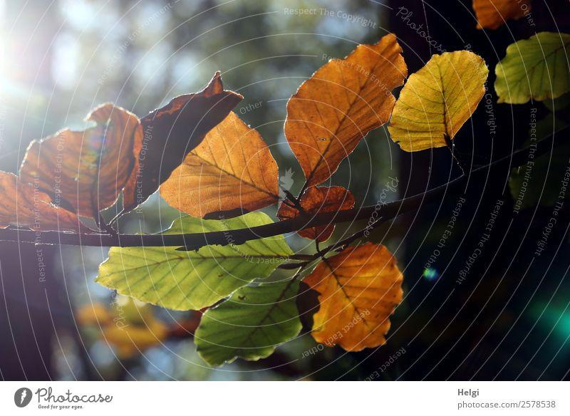 Emotionen | Ende des Sommers Umwelt Natur Pflanze Herbst Schönes Wetter Baum Blatt Zweig Herbstlaub leuchten dehydrieren alt authentisch einzigartig natürlich