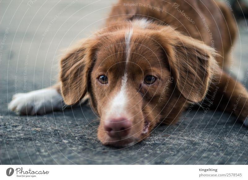 down Natur Hund alt Tier ruhig schwarz Traurigkeit Gefühle braun grau authentisch warten beobachten weich Asphalt Gelassenheit