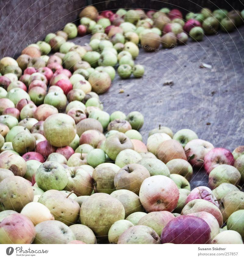 Chamansülz | äbbel Natur Frucht Lebensmittel Zufriedenheit frisch Apfel Ernte Bioprodukte ökologisch saftig sommerlich Vegetarische Ernährung Anhänger Ernährung Fingerfood Landwirtschaft