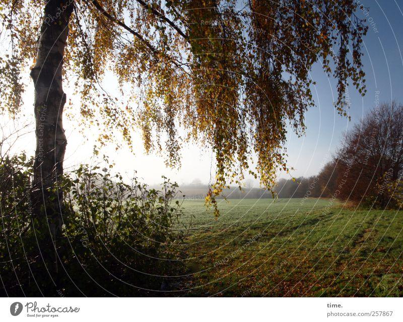 Morgenland Landwirtschaft Forstwirtschaft Umwelt Natur Landschaft Herbst Schönes Wetter Pflanze Baum Gras Grünpflanze Feld ästhetisch Zufriedenheit Einsamkeit