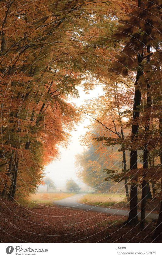 Wo gehst Du hin? Natur grün weiß schwarz Wald gelb Herbst Straße Landschaft Wege & Pfade braun Herbstwald