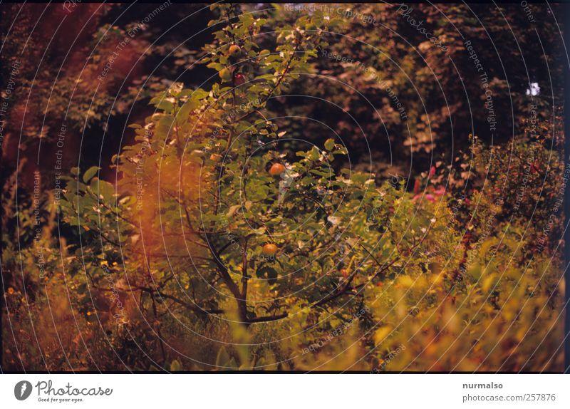 Herbstgarten Natur Baum Pflanze Blatt Tier Umwelt Garten Blüte Stimmung Klima natürlich Wachstum Häusliches Leben Wandel & Veränderung Sträucher