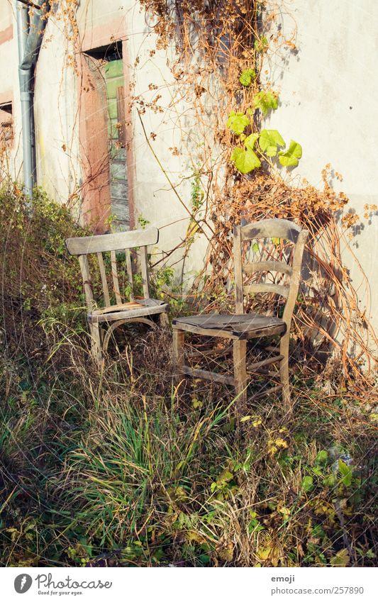 rendez-vous Natur alt Pflanze Wand Umwelt Gras Garten Mauer Fassade Sträucher Stuhl Sitzgelegenheit Verabredung ungepflegt verwildert