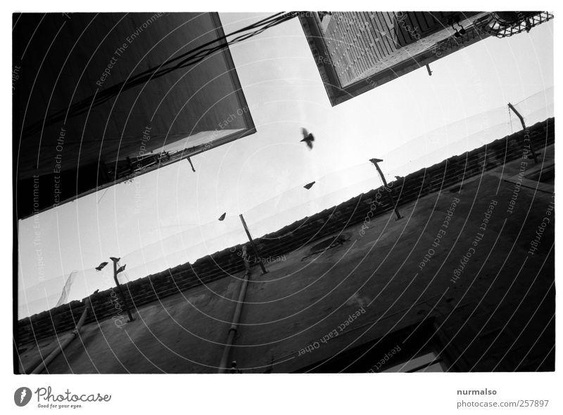 TaubenT Himmel Stadt Tier dunkel Wand Umwelt Gebäude Mauer Stimmung Kunst Vogel Fassade fliegen Wildtier Lifestyle Häusliches Leben