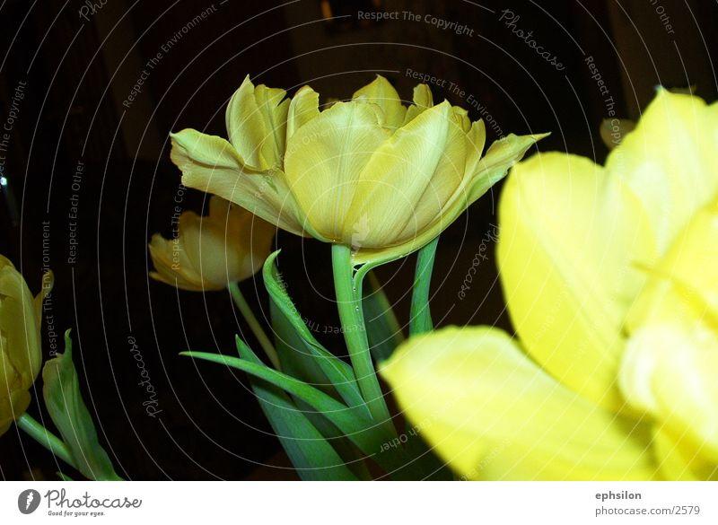 blumen Blume