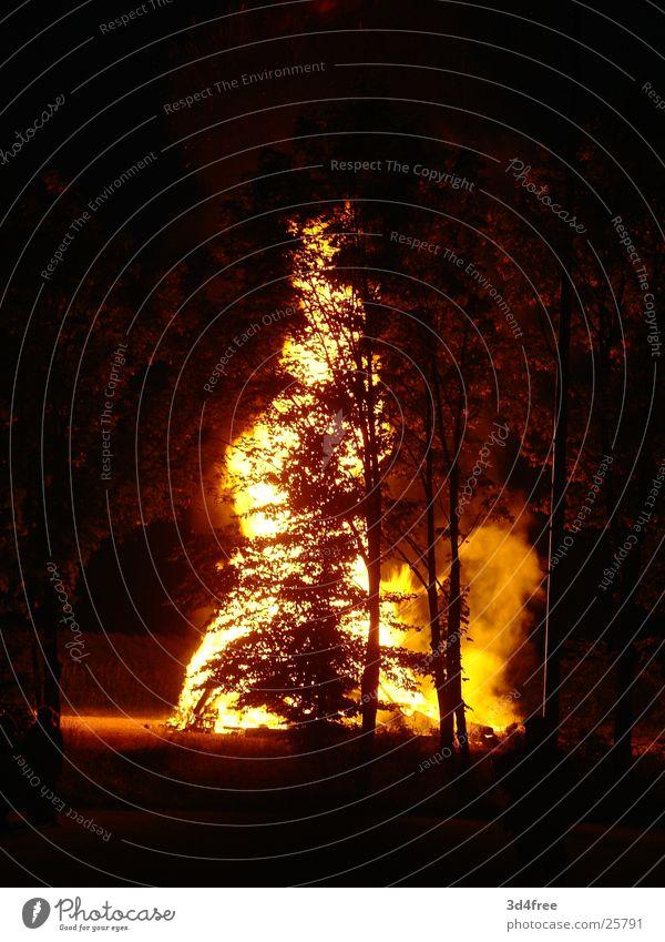 Feuerschen hinterm Baum Waldlichtung Holz brennen Nacht heiß Physik Holzstapel Flackern rot gelb Brand Flamme Abend Feste & Feiern Sommersonnenwende Wärme hoch