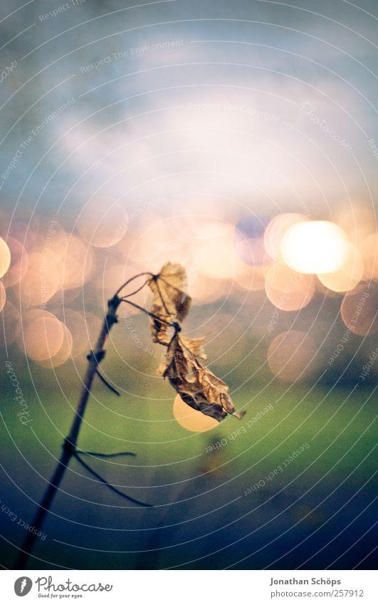 einsames Blatt vorm Lichtermeer [hoch] Himmel Natur blau grün Einsamkeit gelb Herbst Wiese Umwelt Landschaft Gefühle Traurigkeit Stimmung Park braun