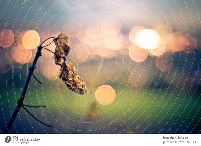 einsames Blatt vorm Lichtermeer [quer] Natur blau grün Stadt Blatt ruhig Einsamkeit Umwelt Landschaft Gefühle Stimmung Park braun Zufriedenheit gold glänzend