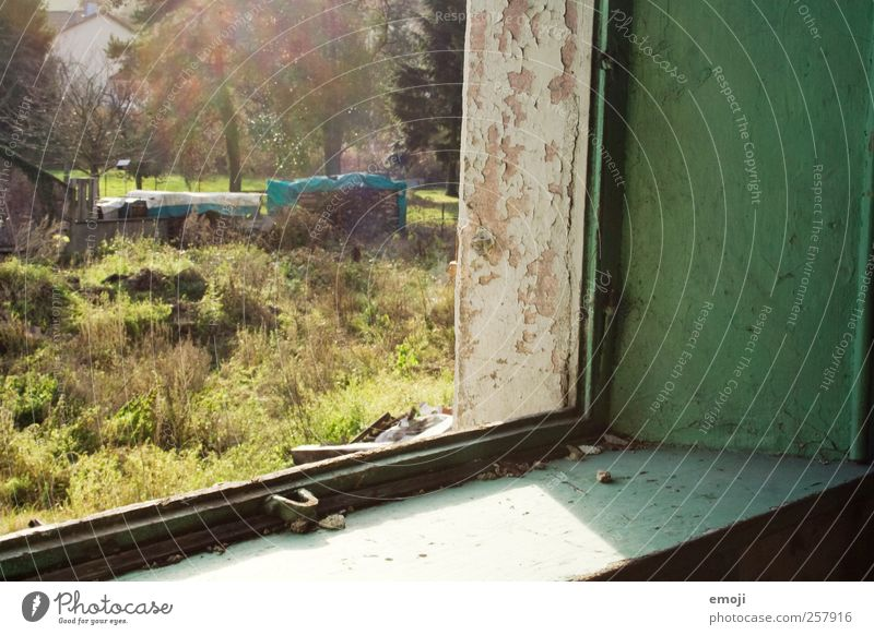 grüne Ecke Natur alt grün Haus Fenster Wand Garten Mauer Fassade verfallen Fensterblick Fensterrahmen Fenstersims