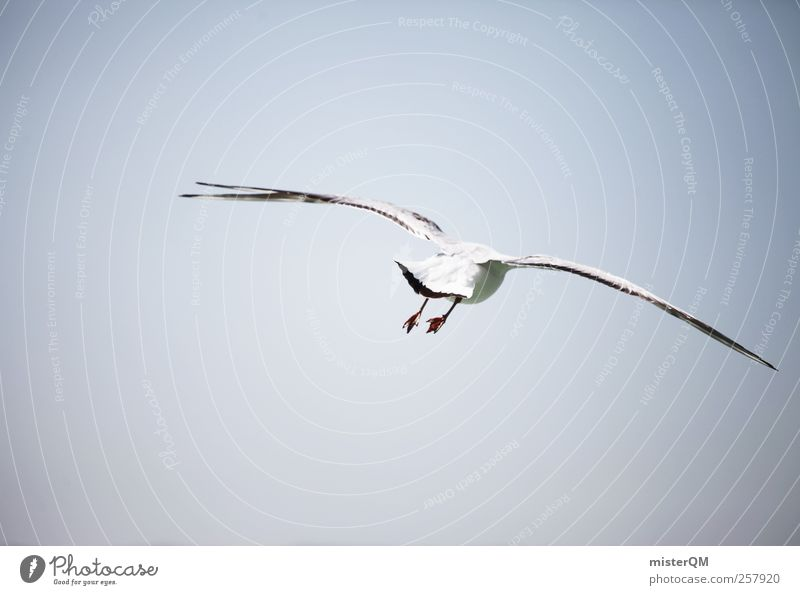 Möwenpic. Tier ästhetisch Möwenvögel Vogel Vogelperspektive fliegen Luft Küste Ferne Flügel Fernweh Ostsee Farbfoto Gedeckte Farben Außenaufnahme Detailaufnahme