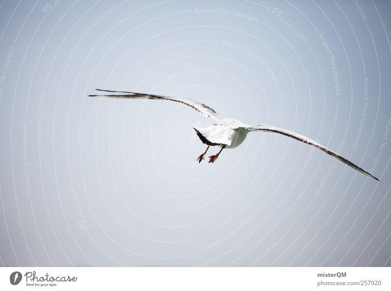 Möwenpic. Tier Ferne Küste Luft Vogel fliegen ästhetisch Flügel Ostsee Fernweh Möwenvögel