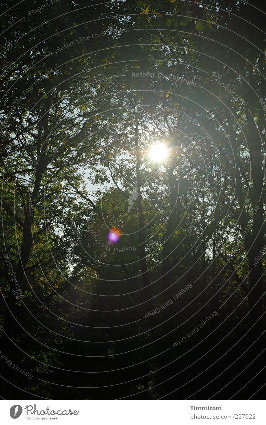 Komm! Natur grün Baum Pflanze schwarz ruhig Wald Herbst Leben dunkel Holz Stimmung Schönes Wetter