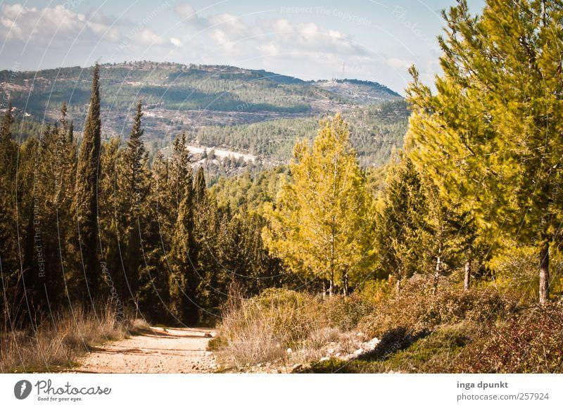 durch das heilige Land Umwelt Natur Landschaft Pflanze Urelemente Himmel Herbst Schönes Wetter Wärme Dürre Baum Gras Sträucher Wildpflanze Wald Hügel