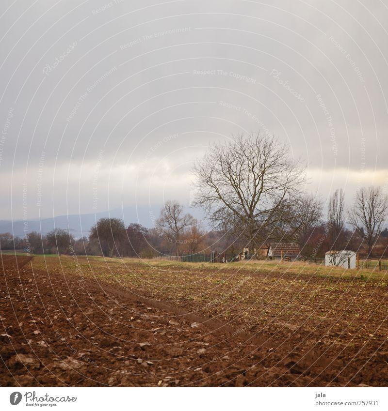 acker Umwelt Natur Landschaft Himmel Herbst Pflanze Baum Sträucher Feld natürlich trist Farbfoto Außenaufnahme Menschenleer Textfreiraum oben Dämmerung