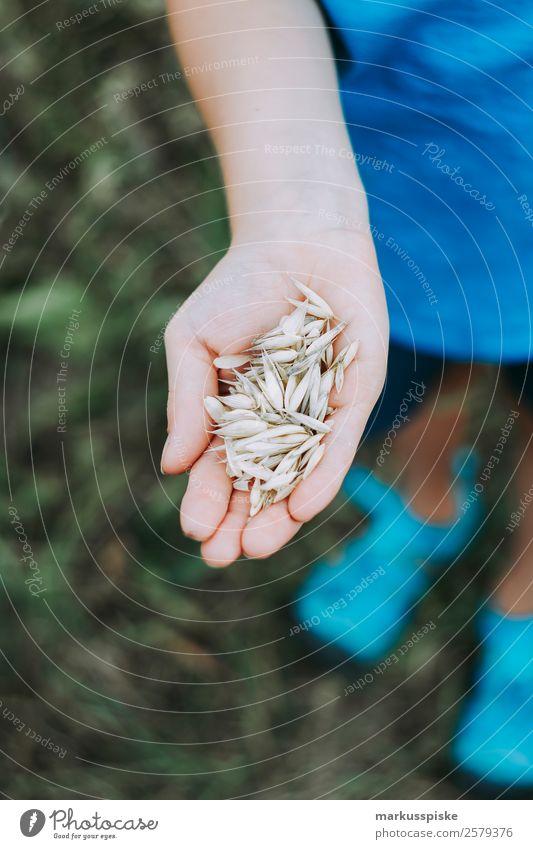 Kind sammelt Hafer Getreide Mensch Natur Gesunde Ernährung Pflanze Hand Freude Ferne Junge Spielen Freiheit Ausflug PKW Feld Kindheit Abenteuer