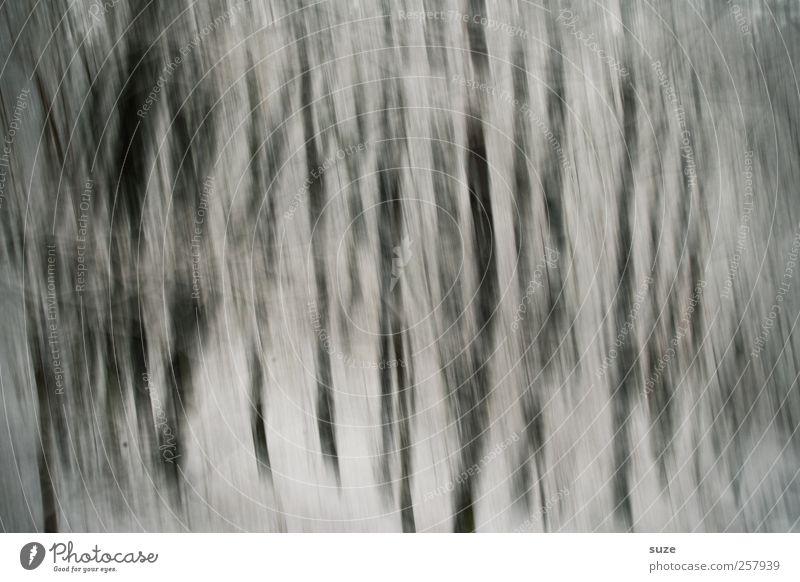 Das Grauen Natur Pflanze Baum Einsamkeit Landschaft Winter Wald Traurigkeit Gefühle Schnee Tod grau außergewöhnlich Kunst träumen Angst