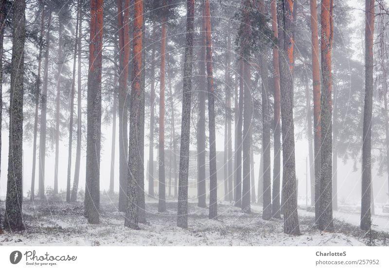 Tåke Haus Traumhaus Garten Natur Luft Wassertropfen Winter Klima Nebel Eis Frost Schnee Schneefall Nebelbank Nadelwald Kiefer Fichte Nadelbaum Baum Baumrinde