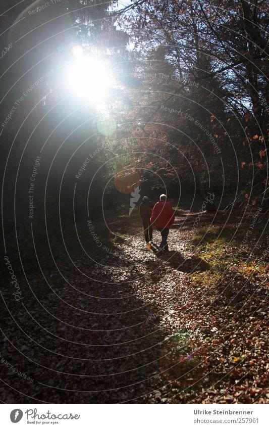 Herbstlich(t) Mensch Frau Natur Mann Ferien & Urlaub & Reisen Baum Pflanze Erwachsene Wald Umwelt Landschaft Berge u. Gebirge Herbst Paar gehen Freizeit & Hobby