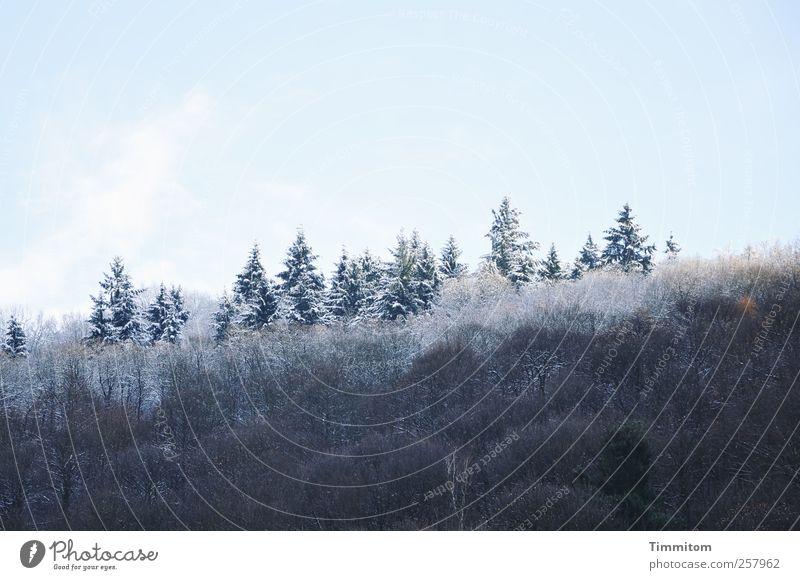 Winterauftrieb Natur Pflanze Himmel Wolken schlechtes Wetter Schnee Baum Wald Hügel Holz ästhetisch kalt schön blau weiß Glück Lebensfreude Zufriedenheit